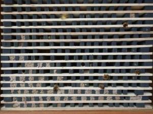 2014-wildbienen-nisthilfe-angenommen